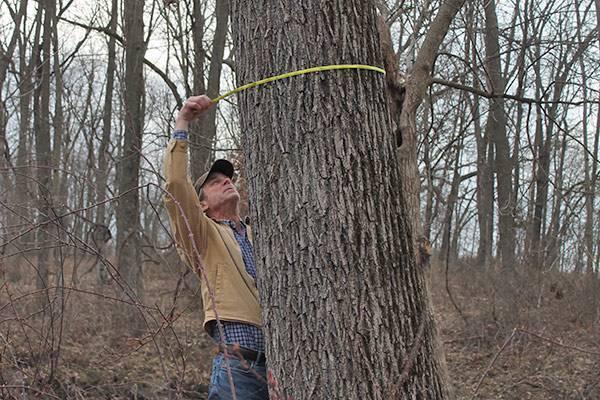 Standing Timber & Log Purchasing - American Walnut Company